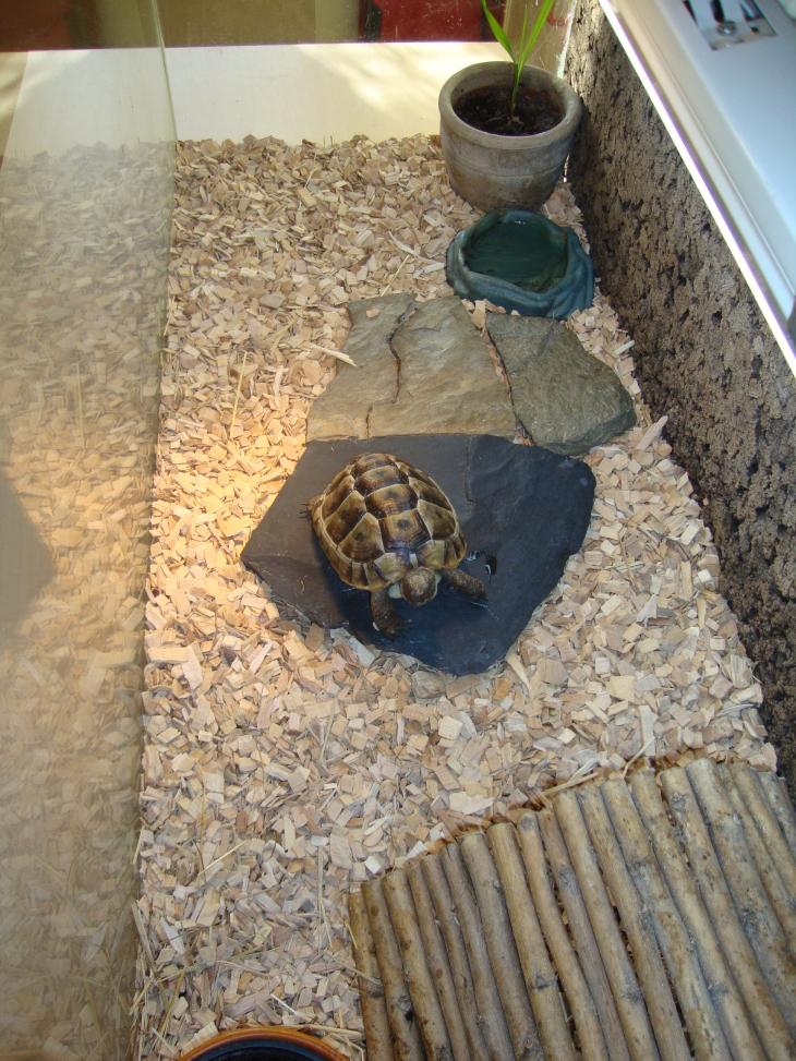Het Terrarium Voor Uw Landschildpad
